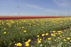 Ветротурбины против голубого неба и желтого красного тюльпана field в hol Стоковая Фотография