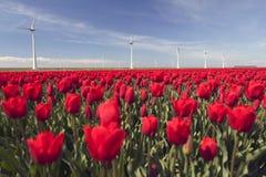 Ветротурбины против голубого неба и красного тюльпана field в Голландии Стоковое Изображение RF