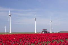 Ветротурбины против голубого неба и красного тюльпана field в Голландии pl Стоковое Фото