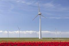 Ветротурбины против голубого неба и красного тюльпана field в Голландии Стоковые Фото