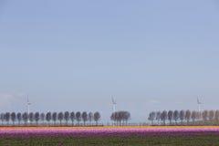 Ветротурбины против голубого неба и красного тюльпана field в Голландии Стоковые Изображения