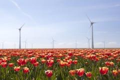 Ветротурбины против голубого неба и красного тюльпана field в Голландии Стоковое Фото