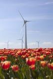 Ветротурбины против голубого неба и красного тюльпана field в Голландии Стоковое фото RF