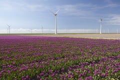 Ветротурбины против голубого неба и фиолетового тюльпана field в Голландии Стоковые Фото