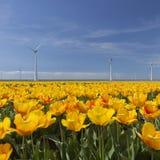 Ветротурбины против голубого неба с оранжевыми тюльпанами в foregro Стоковое Фото