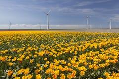 Ветротурбины против голубого неба с оранжевыми тюльпанами в foregro Стоковые Изображения