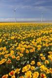 Ветротурбины против голубого неба с оранжевыми тюльпанами в foregro Стоковая Фотография