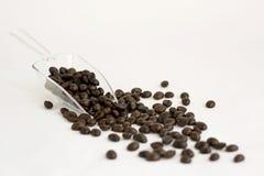 ветроуловитель кофе фасолей Стоковые Изображения