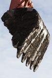ветроуловитель Стоковая Фотография