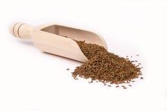 Ветроуловитель с семенами Стоковое Фото