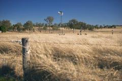 Ветрянка и коровы в сельской местности в течение дня Стоковая Фотография RF