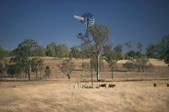 Ветрянка и коровы в сельской местности в течение дня Стоковые Фото