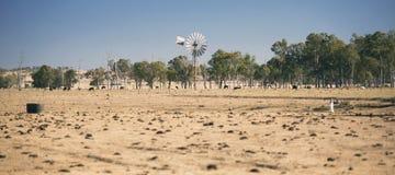 Ветрянка и коровы в сельской местности в течение дня Стоковое Изображение