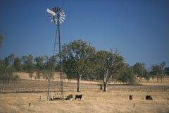 Ветрянка и коровы в сельской местности в течение дня Стоковые Фотографии RF