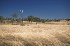 Ветрянка и коровы в сельской местности в течение дня Стоковое Изображение RF