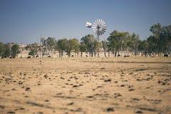Ветрянка и коровы в сельской местности в течение дня Стоковые Изображения RF