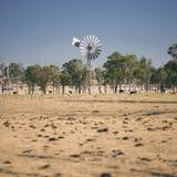 Ветрянка и коровы в сельской местности в течение дня Стоковое фото RF