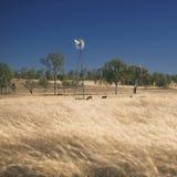 Ветрянка и коровы в сельской местности в течение дня Стоковое Фото