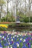 Ветрянка и тюльпаны в голландском цветочном саде стоковое фото rf