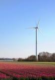 ветрянка тюльпанов Голландии Стоковая Фотография