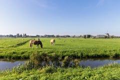 ветрянка фермы животных Стоковые Фотографии RF