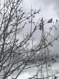 Ветрянка Bokea стоковые изображения