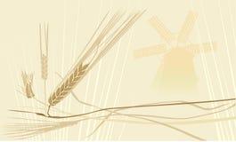 ветрянка whith пшеницы fileld Стоковые Изображения RF