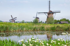 ветрянки весны ландшафта страны голландские Стоковые Фотографии RF