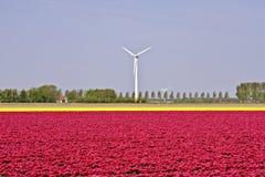 ветрянки голландских тюльпанов типичные Стоковое Фото