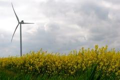 Ветрянки на поле Стоковые Изображения