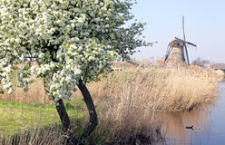 Ветрянки на Kinderdijk, Нидерландах Стоковые Фотографии RF