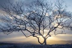 Ветр-дунутое дерево стоковое изображение rf