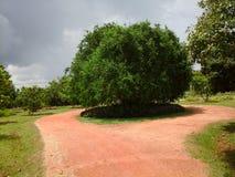 Ветчина 6 сада Стоковые Изображения