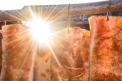 Ветчина свинины в солнце Стоковое Изображение