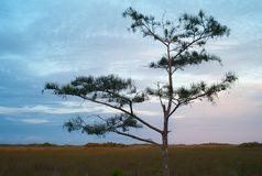 Вечер в болотистых низменностях с кипарисом стоковые изображения