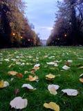 Вечер в парке Стоковые Изображения RF