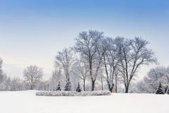 Вечер в покрытом снег лесе зимы Стоковые Изображения
