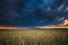 Вечер захода солнца лета над ландшафтом пшеничного поля сельской местности сельским Стоковое Изображение RF