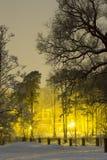 Вечер зимы в парке Стоковая Фотография