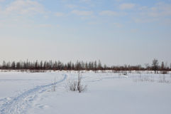 Вечер зимы и морозное lanskape от севера Стоковые Изображения RF