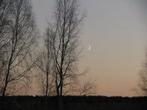 вечер и месяц стоковая фотография