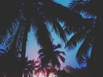 Вечер Кералы стоковые изображения rf