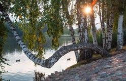Вечер на озере Стоковое Изображение