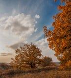 Вечер осени Стоковые Фото
