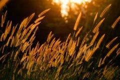 Трава цветка Стоковая Фотография