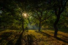 Вечер Smokey Стоковые Изображения