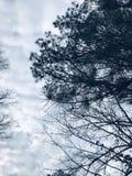 Вечнозеленое небо стоковое изображение rf