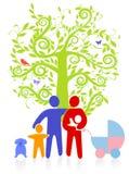вечнозеленое фамильное дерев дерево Стоковые Изображения RF