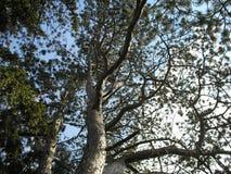 вечнозеленые валы стоковая фотография