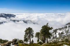 Вечнозеленые деревья высокие на горе; море белых облаков на заднем плане покрывая долину, держатель Сан Антонио (Mt Baldy), Лос стоковые фото